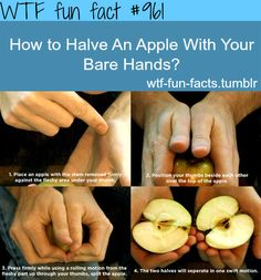 how to halve an apple with your bare hands  MORE OF WTF-FUN-FACTS are coming HERE  funny and weird facts ONLY