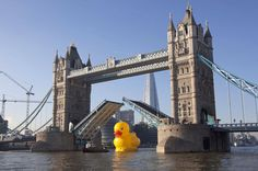 """December 11, 2012 Headline reads: """"Rubber Duck floats along the Thames"""" ~ As a PR stunt, an online gaming company sent a 50-foot, giant yellow duck gliding along the River Thames in London, passing right beneath the Tower Bridge. NBC's Brian Williams reports."""