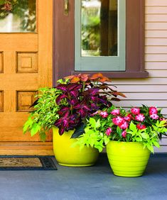 Add pizzazz to a shady front entrance with bright pots full of ColorBlaze Coleus, impatiens and Sweet Caroline sweet potato vines.