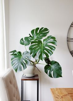 House Plants 74875 Get Pricey Houseplants For Free Part Monstera Deliciosa Easy House Plants, House Plants Decor, Monstera Deliciosa, Faux Philodendron, Low Maintenance Indoor Plants, Decoration Plante, Plant Aesthetic, Interior Plants, Natural Home Decor