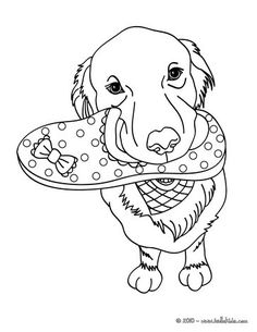 cute labrador coloring page beautiful dog coloring sheet for all animals lovers