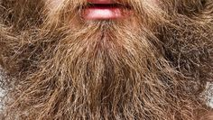 What comes after the #beard trend? Some say the #hipster bushes have already made a comeback. Find out more: https://goo.gl/pP97B6