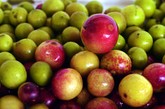 Camu Camu, Can You? Why You Should Add This Superfruit to Your Daily Diet!
