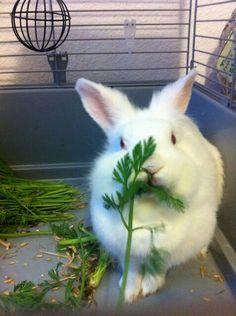 I need bunnies in my life