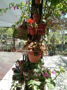 Planter Pots, Flowers