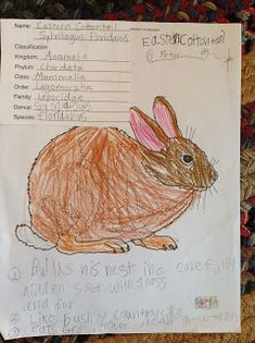 coloring pages animal classification lesson - photo#42