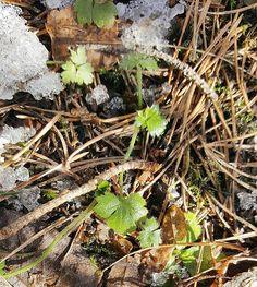 Hello spring  #kevät #spring #springmood #kevättäkohti #seasonsoffinland #luonto #nature #naturelover #natureoffinland #uudetalut #newbeginnings #lifestyleblogger #nelkytplusblogit #åblogit #ladyofthemess