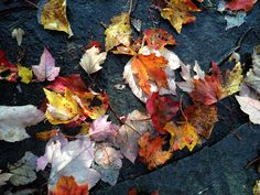 #WonderWatch 2015-124 Grounded Glory #UpperDelawareRiverRegion #PoconoMtns #leaves #GlimpsesOfFall #nature #NaturePhotography #SandyLongPhotos #fall #FallFoliage #FavoriteTimeOfYear #Autumn #AtYourFeet #GroundEyeView #MarvelsOfNature #LookDown #October #TakeNotice #Impermanence