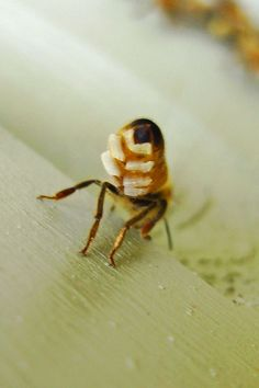 The beewachs we use in our products is sourced from bees and bee keepers in New Zealand. www.potofgold-skincare.com