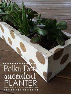 Succulent Planter Box (42) copy