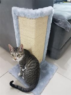 How to make scratching posts for cats: step by step and ideas - Crafts Step by Step! - How to make scratching posts for cats: step by step and ideas – Crafts Step by Step! Cat Steps, Diy Cat Toys, Cat Scratching Post, Cat Tree, Pet Shop, Cat Lady, Animals And Pets, Cat Lovers, Dog Cat