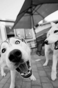 anarchy-uk:  .