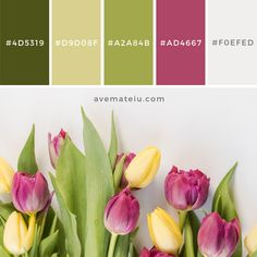Selective Focus Photography of Pink and Yellow Tulips Flowers Color Palette – Ave Mateiu Green Things green color combinations