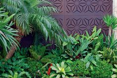 Get The Tropical Look. Choose the perfect plants to create a lush landscape Tropical Backyard Landscaping, Tropical Garden Design, Landscaping Plants, Tropical Plants, Tropical Flowers, Tropical Gardens, Landscaping Ideas, Tall Plants, Foliage Plants