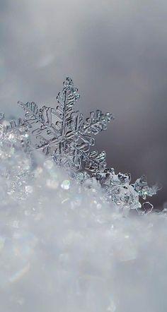 winter phone wallpaper