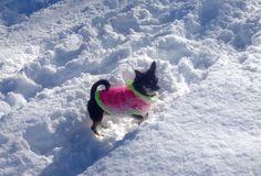 Puppy mit ihrem neuen Pulli im Schnee - Hundemode selber stricken Puppies, Snow, Breien, Puppys, Pup, Doggies, Teacup Puppies