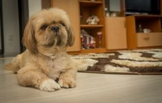 Otto - My Dog by Marius Ivan on Beautiful Pictures, Dogs, Animals, Animales, Animaux, Animal Memes, Animal, Pet Dogs, Dog