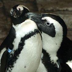Live Web Cams of different animals at Monterey Bay Aquarium - SO COOL!!!