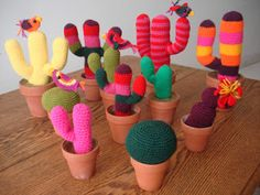 Todos Quieren: Cactus varios