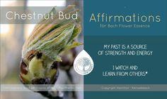 Chestnut Bud Chestnut Bud, Bach Flowers, Emotional Healing, Oracle Cards, Flower Power, Beautiful Things, Mental Health, Affirmations, Remedies