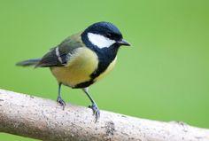 Die 30 häufigsten Gartenvögel - LBV - Gemeinsam Bayerns Natur schützen - LBV