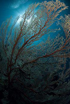 .under the sea.