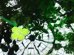 Green reflections . . . #sanmarino #art #huntingtonlibrary #california #losangeles #lonelyplanet #socal #cali #greenhouse #garden #reflection #water #green
