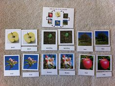 One of our most popular free downloads - life cycle of an apple!