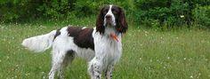 Bien choisir son chien – Perdrioles
