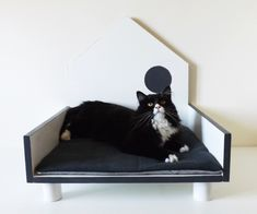 Wooden design kennel for cats and dogs small basic line _ Blackander white and gray color Shih Tzu, Yorkshire, Chihuahua, Cats, Design, Gatos, Chihuahua Dogs, Cat