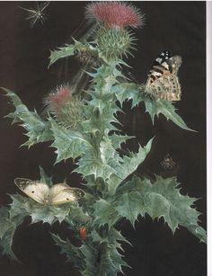 Barbara Regina Dietzsch, Thistle and butterflies