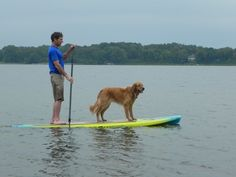 Dog paddle boarding! RAVE Sport's SUPs are pet friendly. https://www.ravesports.com/sups
