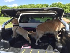 Brother bought a shade for his Hilux. Ready to see the world!   http://ift.tt/242LlSV via /r/dogpictures http://ift.tt/20m5BxL  IFTTT reddit
