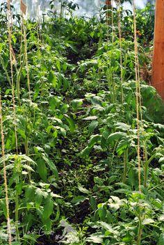 Aproape totul despre rosii Garden Pool, Vegetable Garden, Garden Design, Diy And Crafts, Plant Leaves, Solar, Berries, Seeds, Pergola