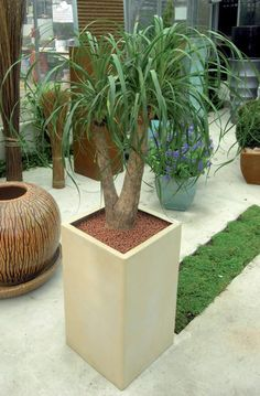 Towik Planter range available from @plantfinderpro.  See more colors and sizes at http://www.livingreendesign.com/category/9-grp-towik-planter.aspx