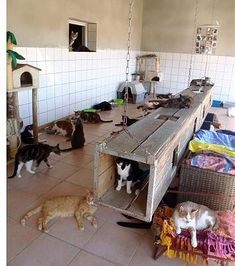 Outdoor Cat Run, Cat Kennel, Outdoor Cat Enclosure, Cat Cafe, Cat Room, Dog Daycare, Space Cat, Cat Furniture, Cats And Kittens