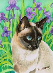 Siamese and irises Val Stokes