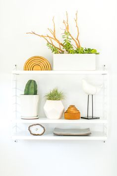 Stylish shelves. Plants in white ceramic containers with interesting decorative accents. Photographed by Marisa Vitale.