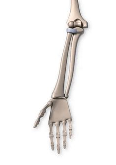 There are 6 types of synovial joints. They have varying shapes, but the important thing about them is the movement they allow. Let's go through each joint. Arm Anatomy, Body Anatomy, Anatomy Art, Human Joints, Body Joints, Human Anatomy Drawing, Human Anatomy And Physiology, Skeleton Figure, Skeleton Anatomy