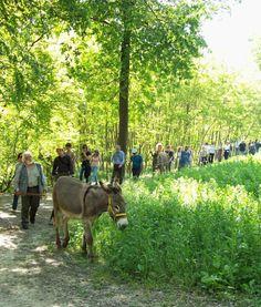 Ultimissimo dall'orto: pomeriggio in campagna tra orchidee selvatiche, asini e teatro nell'aia a Cantarana (Asti)