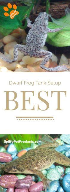 BEST Dwarf Frog Tank Setups You've Ever Seen. Promise! African Frogs, Dwarf Frogs, Frog Tank, Frog Cookies, Frog Habitat, Frog Baby Showers, Frog Coloring Pages, Pet Frogs, Frog Drawing