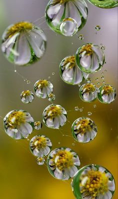 Very pretty image, flower reflections in raindrops, nature's beautiful image