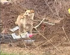 When 68-year-old Lao Pan died in China in November 2011, the only surviving member of his family was a small yellow dog. The heartbroken pup took up residence at Pan's graveside and refused to leave even after going seven days without food. However, villagers took notice of the loyal canine and began bringing food and water to the gravesite — they even plan to build a kennel there for the dog.