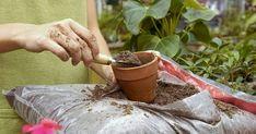 Чем подкармливать и удобрять домашние растения