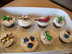 Bug cupcakes I made for my son's preschool class :)
