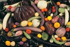 Two Men and a Little Farm: WHY HEIRLOOM SEEDS ARE SO IMPORTANT, WOW!