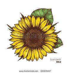 Sunflower vintage engraved illustration