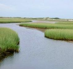 Image result for east harbor cape cod