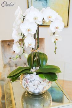 mason jar flower arrangements, white orchids, in a glass round vase, filled with seashellsThe Atlantis – OrchidRepublicLet spring into your home with our beautiful flower arrangements - we have some tips for you, as well as some pretty great pictur Mason Jar Flower Arrangements, Orchid Centerpieces, Orchid Arrangements, Mason Jar Flowers, Beautiful Flower Arrangements, Wedding Flower Arrangements, Fake Flowers, Flower Vases, Beautiful Flowers