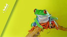 Desenho Realista de Rã | Realistic Drawing frog